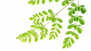 , Moringa Oleifera: Solution to Nutrients Deficiency, Nia Pure Nature